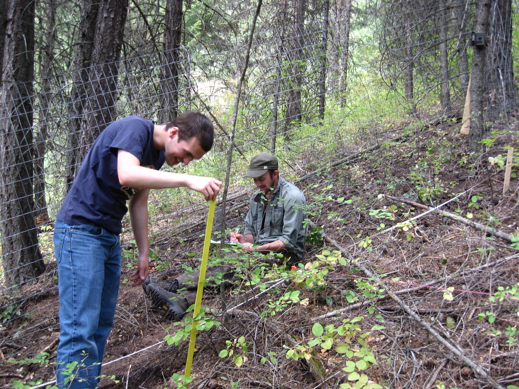 Researchers measuring plants near a fence in wooded area