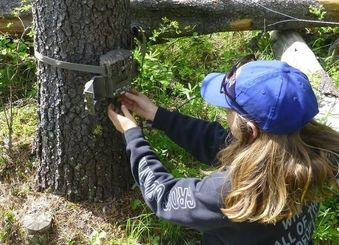 Researcher attaching trail camera to tree